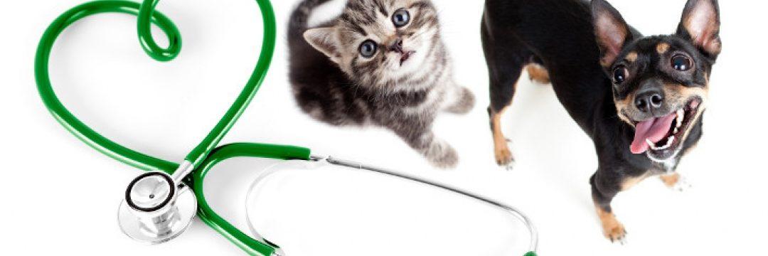 KIDNEY INSUFFICIENCY IN THE CAT