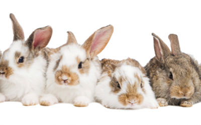 NEW VARIANT OF HEMORRHAGIC VIRAL DISEASE IN RABBITS