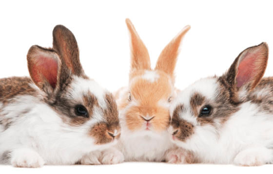 tres conills