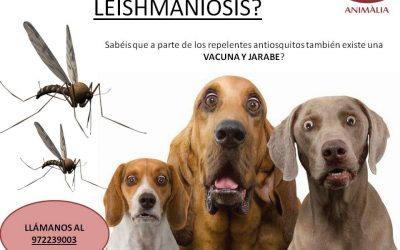 SPRING-SUMMER-AUTUMN: LEISHMANIOSIS. NEW VACCINE!