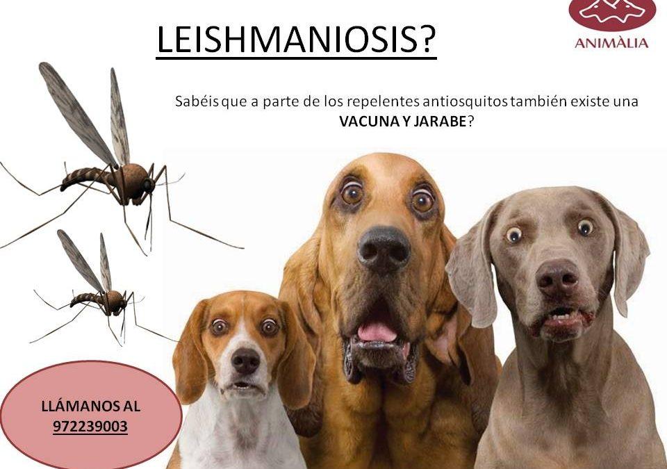 LEISHMANIOSIS WITH VACCINE